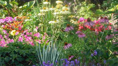 Rastline za robove gred travnikov in stezic for Garden design za