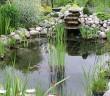 vrt-bajer-ribnik