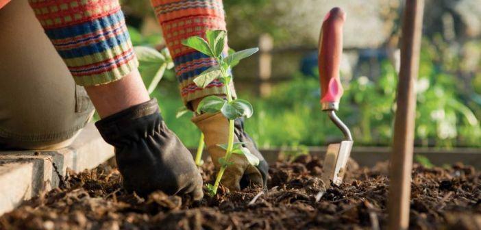 Poceni in uporabno: Z recikliranimi odpadki do lepšega vrta