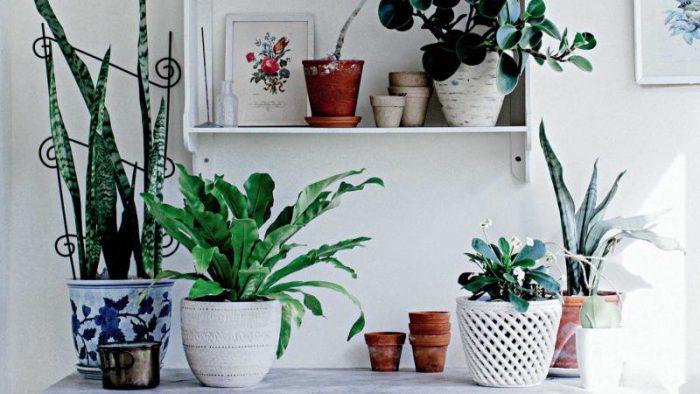 Sobne Rastline Za Bolj E Počutje In čistej I Zrak