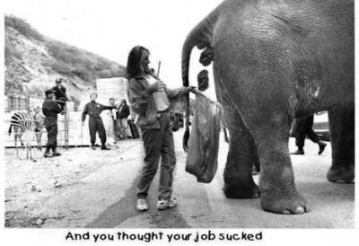 Kaj, če bi imel slon prebavne težave? dailymail.co.uk