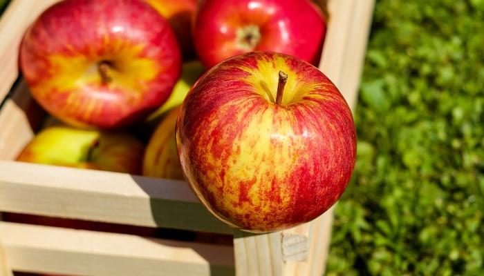 Jabolka postajajo vse mehkejša in slajša.