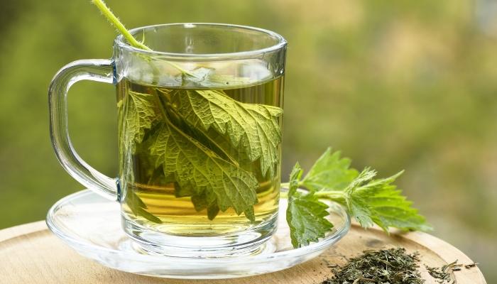 Nasledkan čaj iz svežih kopriv lahko pijete skozi ves da. Vir: hardyherbs.com