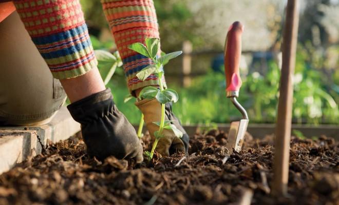 Polži radi napadajo mlade sadike. Zaščitite jih z jajčnimi lupinami. Vir: ozaukeemag.com